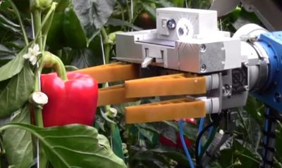 robot-pepper-picker-1_opt
