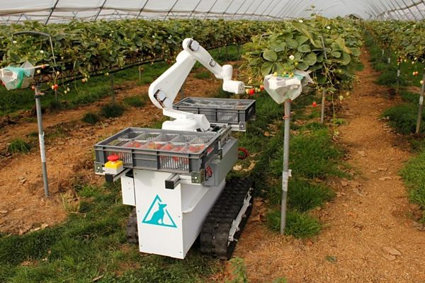 Autonomous robot to harvests soft fruits