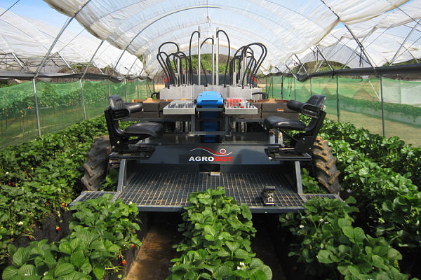 SW 6010 to harvest strawberries
